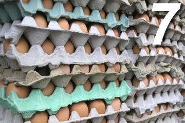 food service and distribution haccp principle 7 establish record